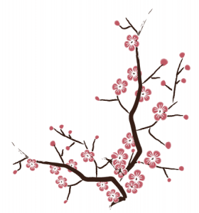 cherry blossom free vector